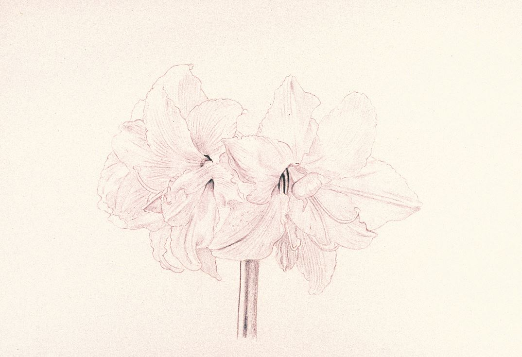 Focusing on flowers step 1 first carefully draw the flowers on watercolour paper with a graphite pencil indicate where the veins in the petals are to help give them shape izmirmasajfo